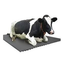 Qatar  Cattle Cow Rubber Mat